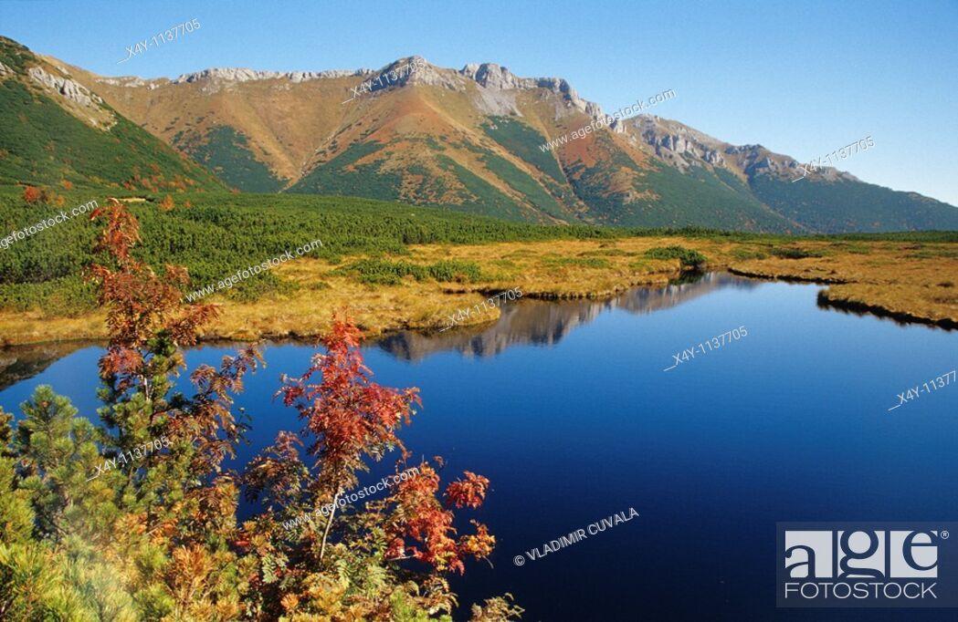 Stock Photo: Autumn colours in Dolina Bielej Vody, High Tatras, Slovakia.