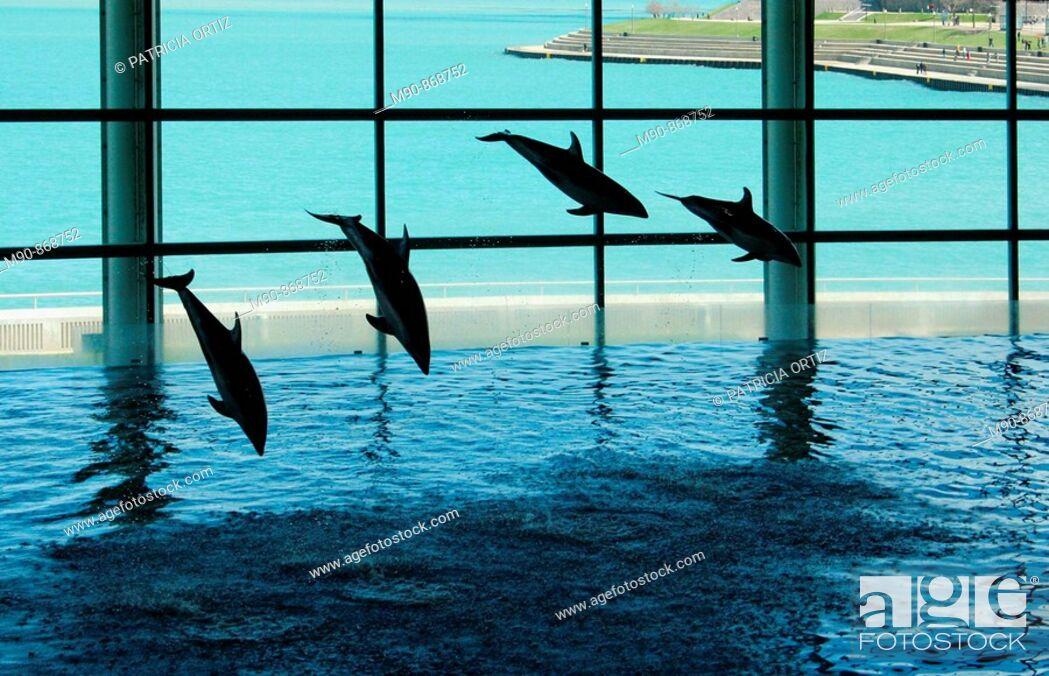 Stock Photo: Dolphins' show in aquarium.