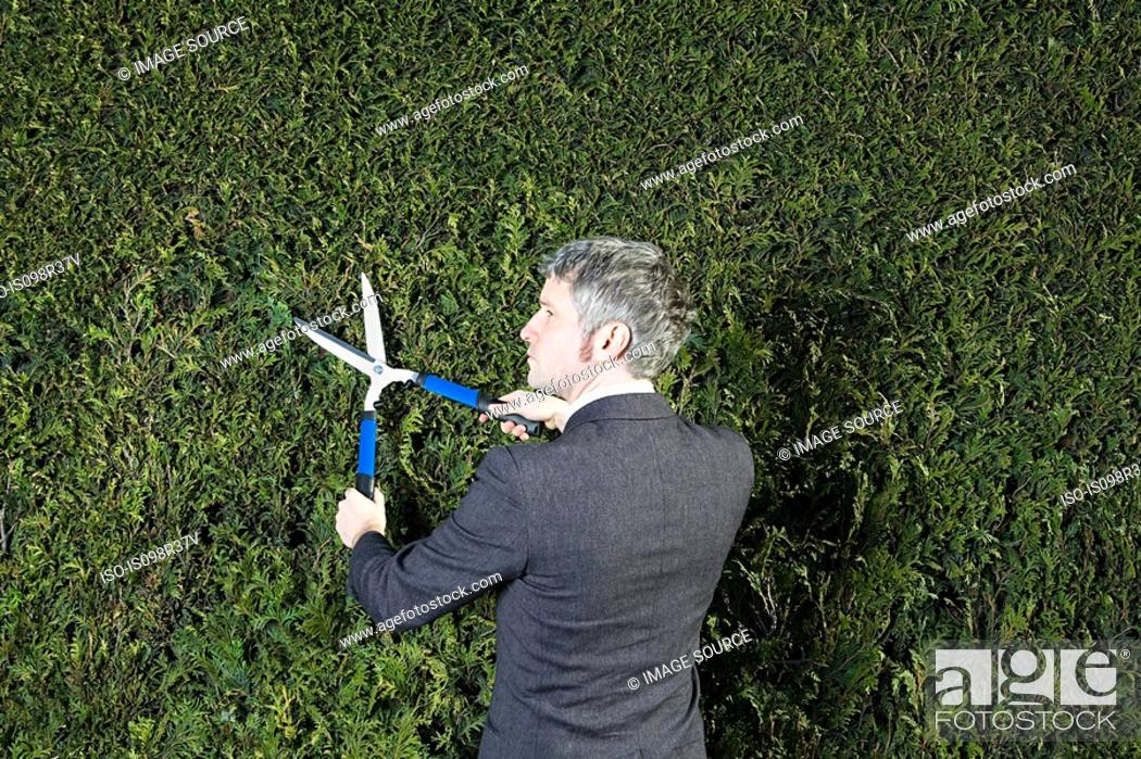Stock Photo: Businessman trimming hedge.