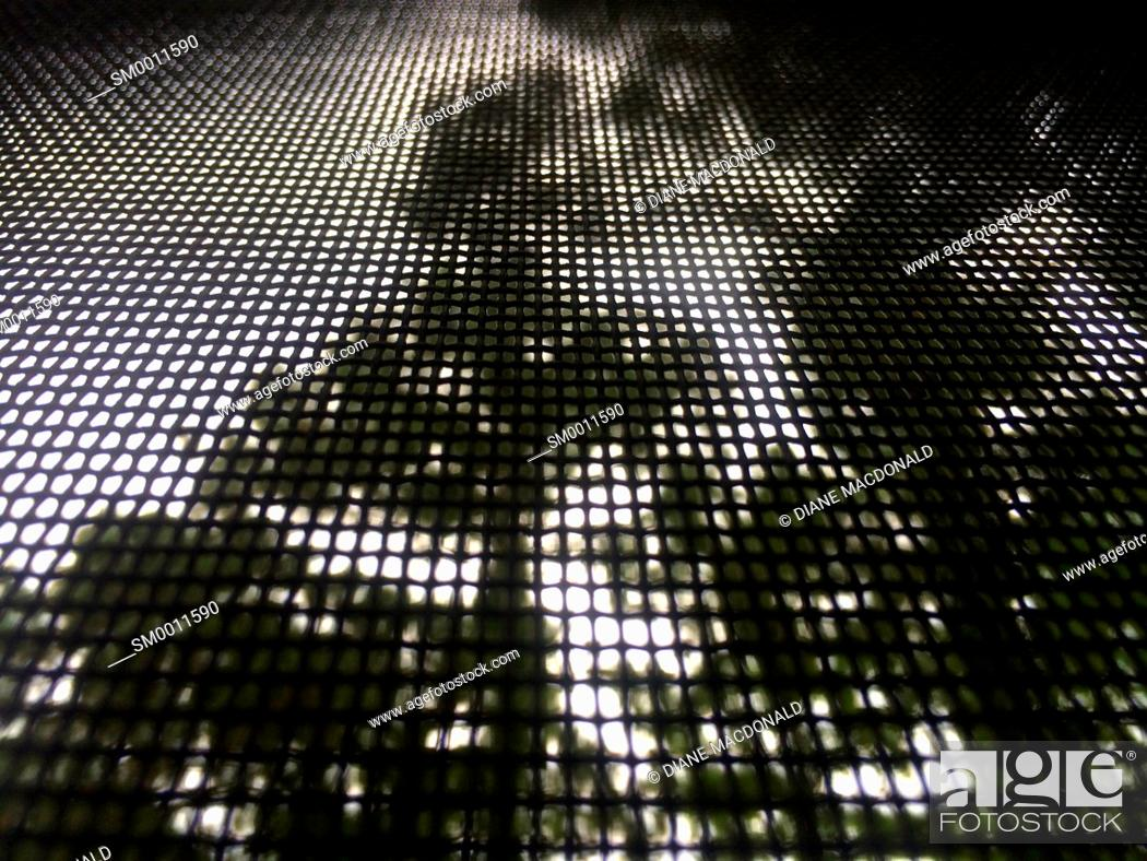 Stock Photo: Pine trees through a screened patio window.