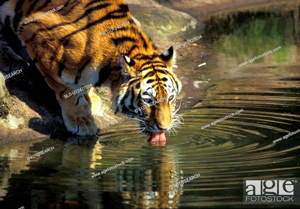 Stock Photo: animal, animals, aichner.