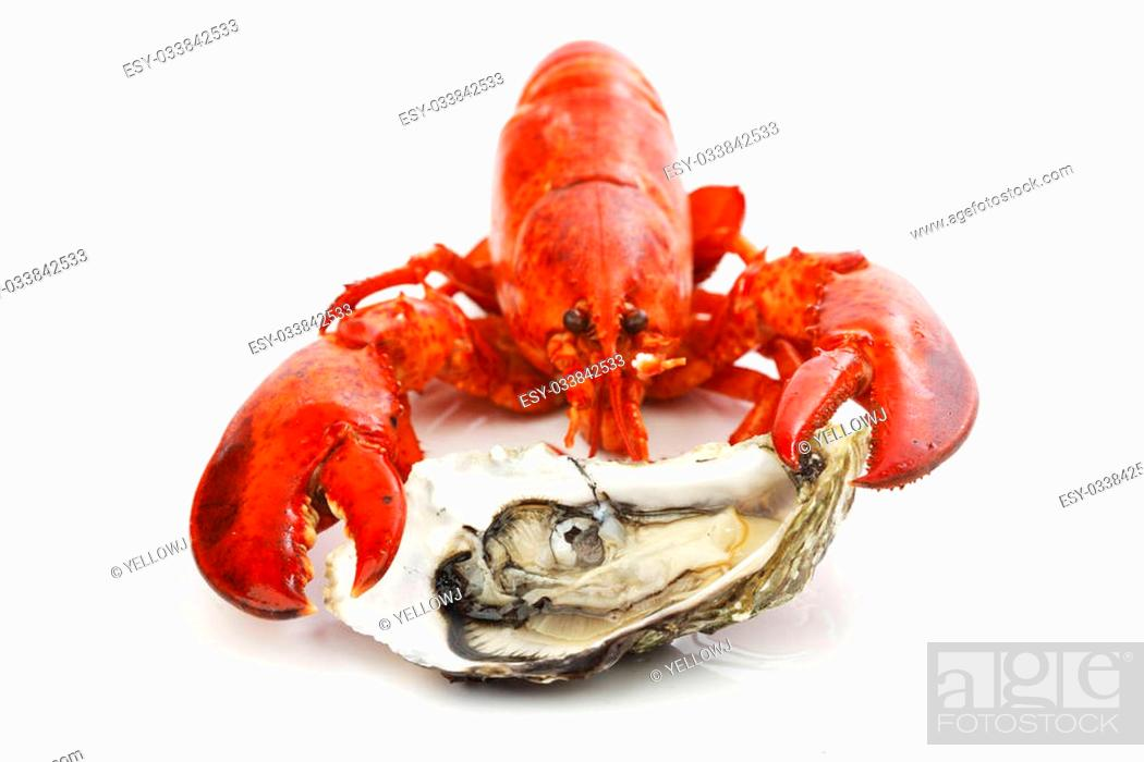 Stock Photo: Lobster and oyster isolated on white background.