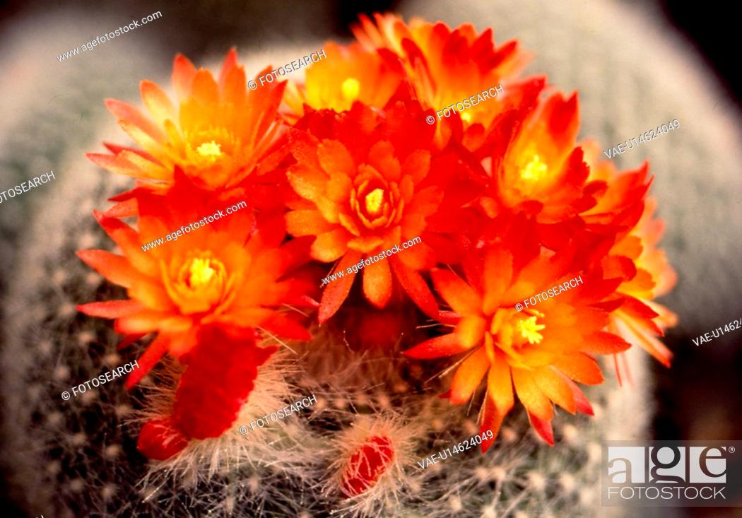 Stock Photo: orange flowers, nature, flowers, flower, scene, wildflower, landscape.