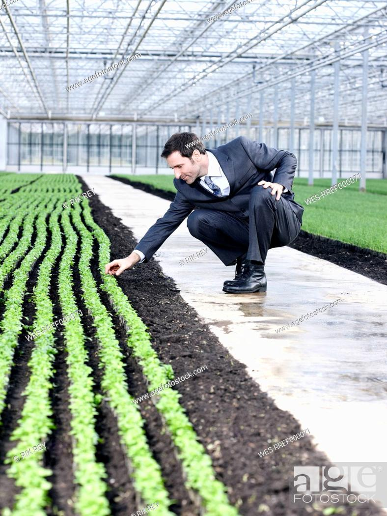 Stock Photo: Germany, Bavaria, Munich, Mature man examining seedlings in greenhouse.