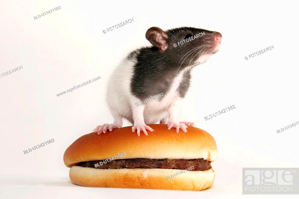 Stock Photo: animals, burger, bun, bread roll, alfred.