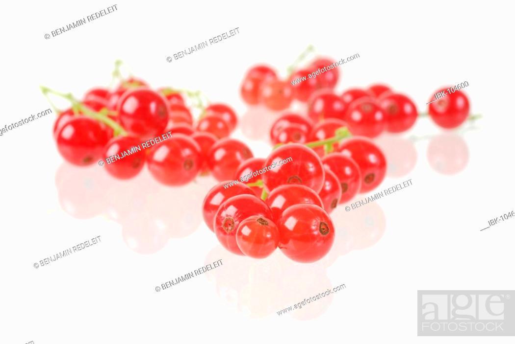 Stock Photo: Redcurrant ribes rubrum.