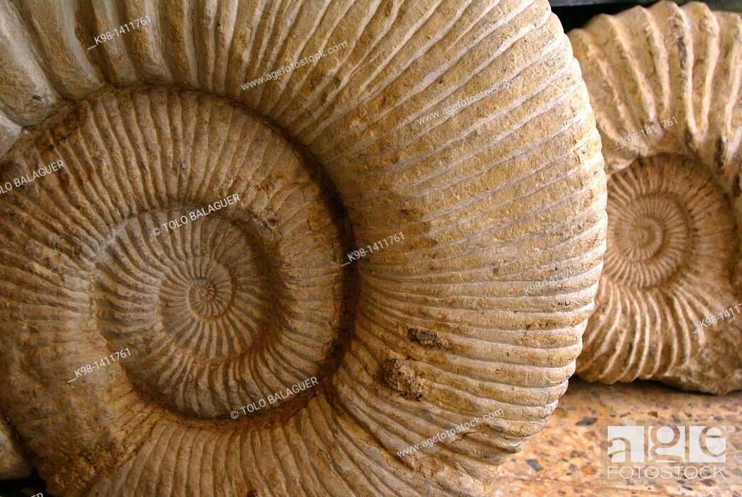 Stock Photo: Fossils Maghreb Atlas Mountains Morocco Africa.