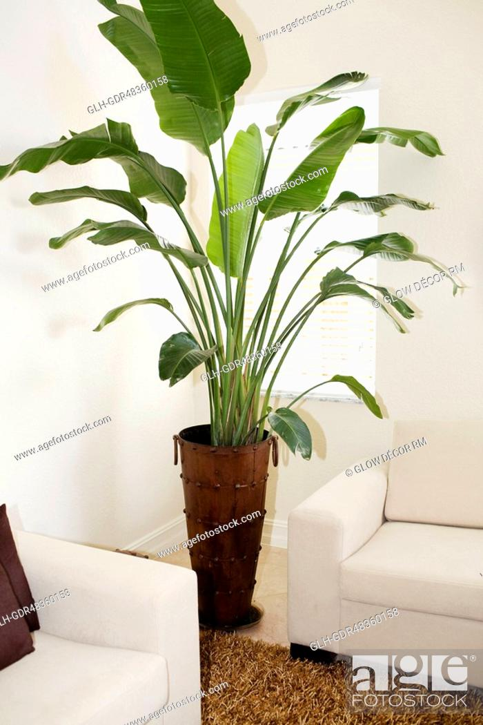 Photo de stock: Potted plant in a living room.