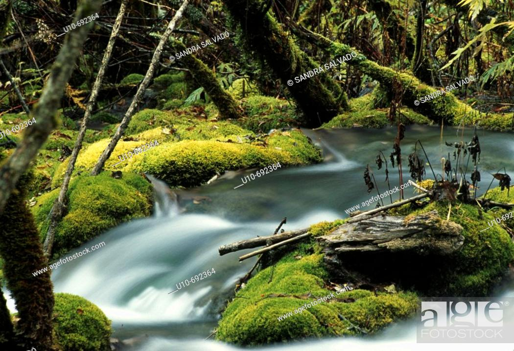 Stock Photo: Jiuzhaigou Valley nature reserve. Sichuan, China.