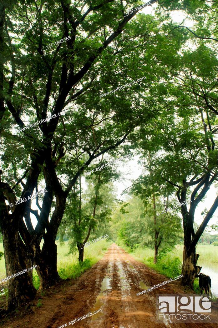 Stock Photo: Trees covering muddy road outside Mandalay.