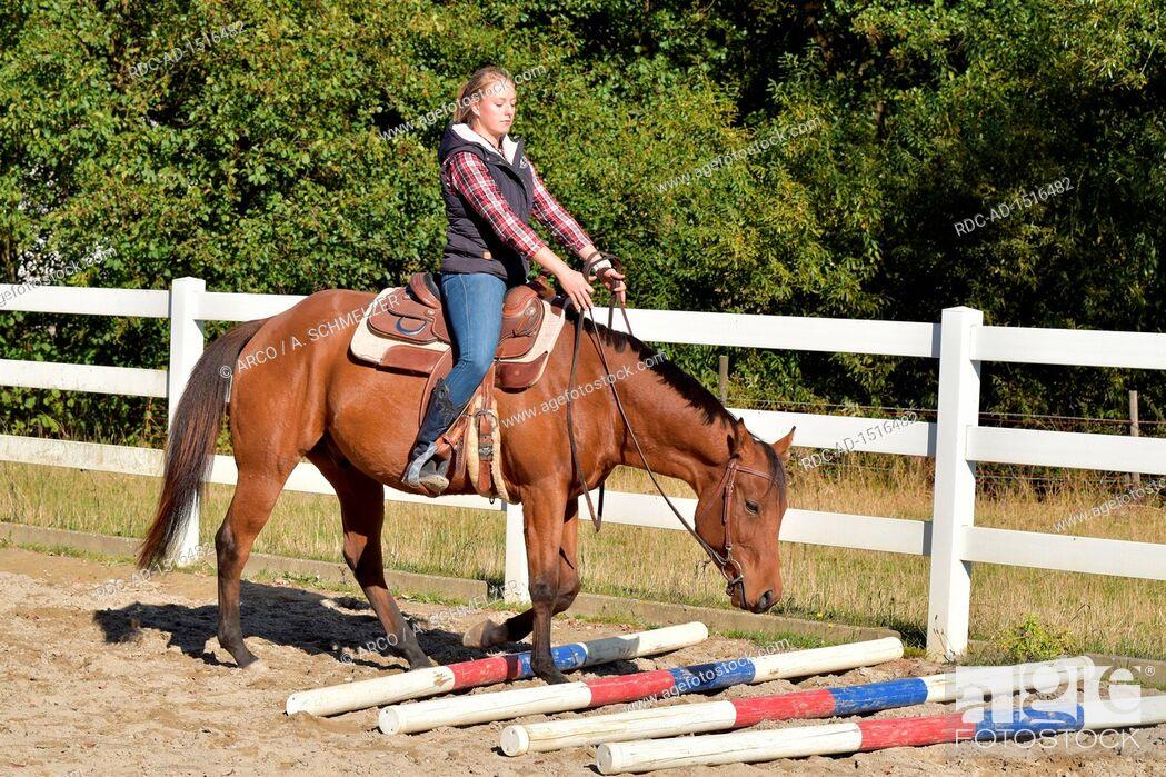 Stock Photo: Horse Training, western horse, ground work, young horse, rails, rail.
