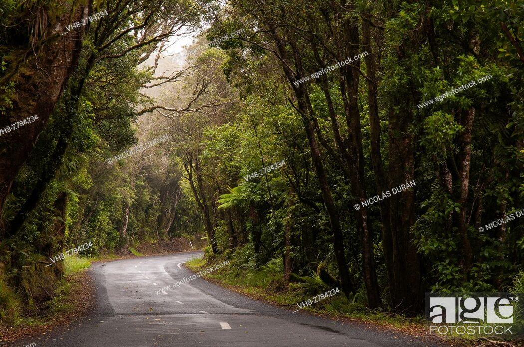 Stock Photo: Road, Taranaki National Park, North island, New Zealand.