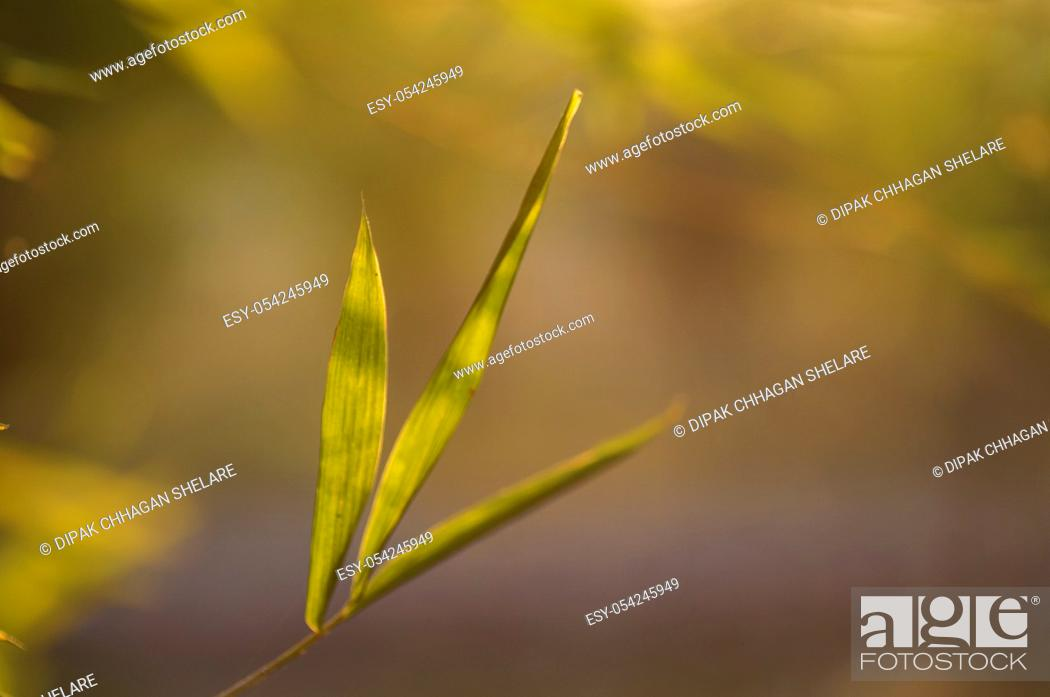 Stock Photo: Bamboo leaves background, Abstract Background.