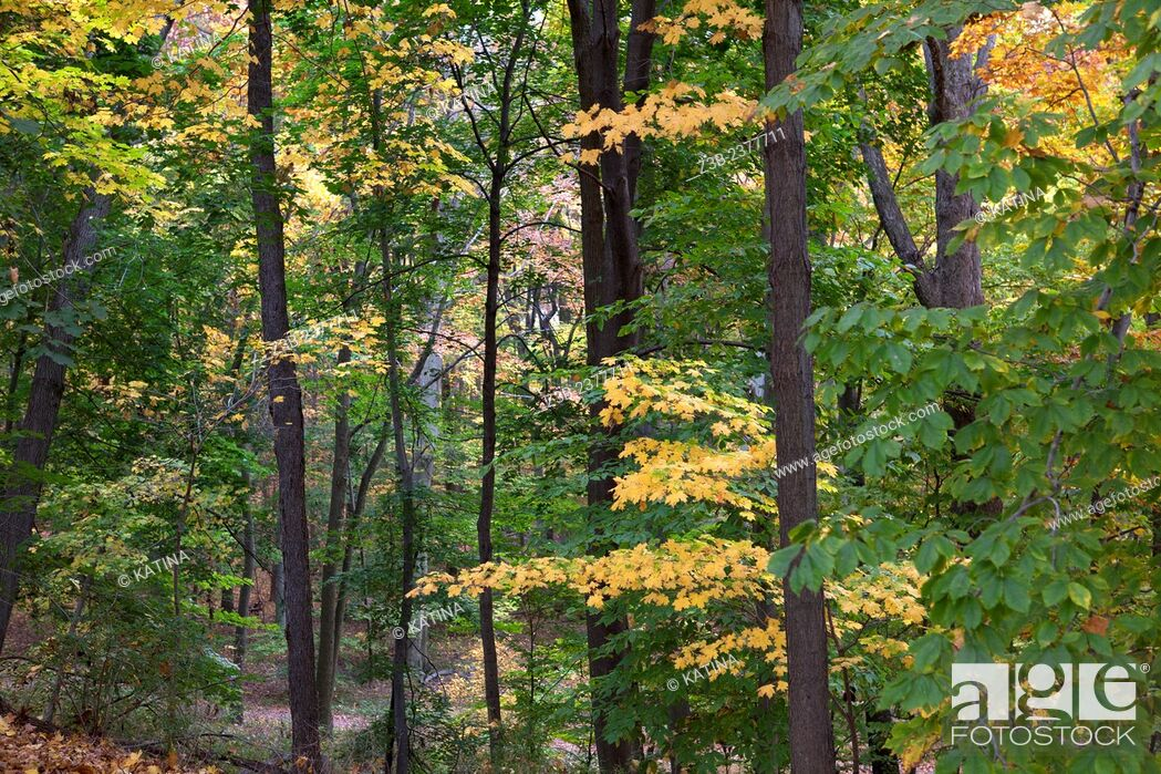 Imagen: Woodland in autumn at the Frelinghuysen Arboretum, Morristown, New Jersey, NJ, USA.