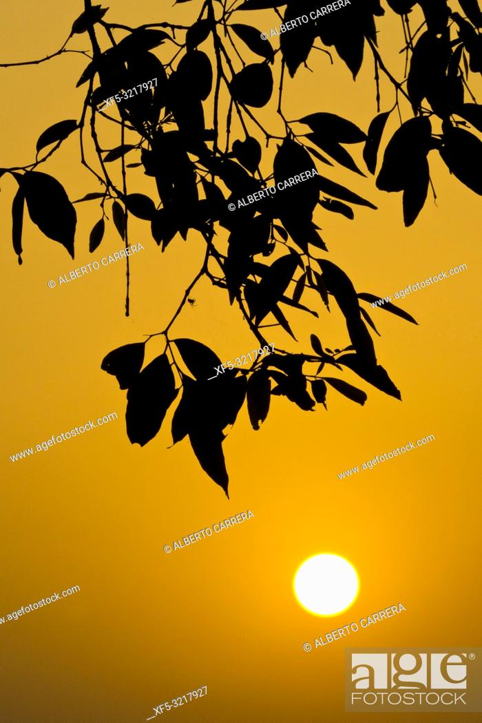Imagen: Sunset, Royal Bardia National Park, Bardiya National Park, Nepal, Asia.