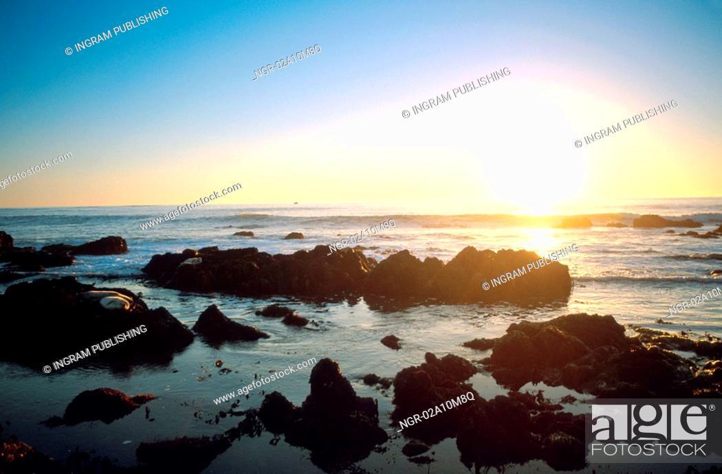 Stock Photo: Seals Resting Near Shore at Sundown.