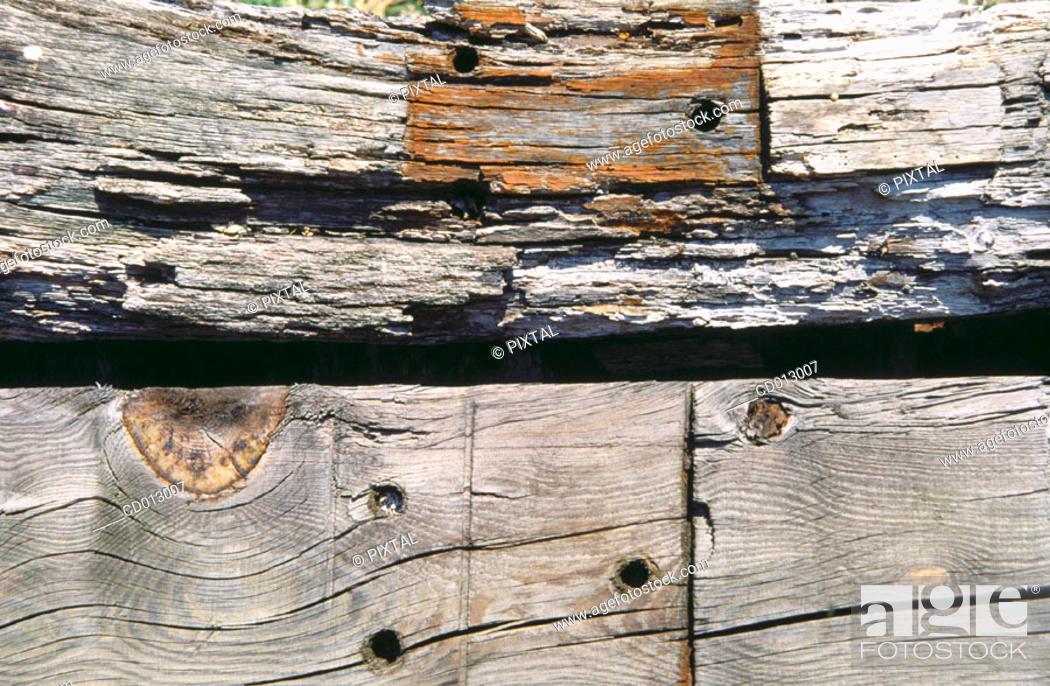 Stock Photo: Wood.