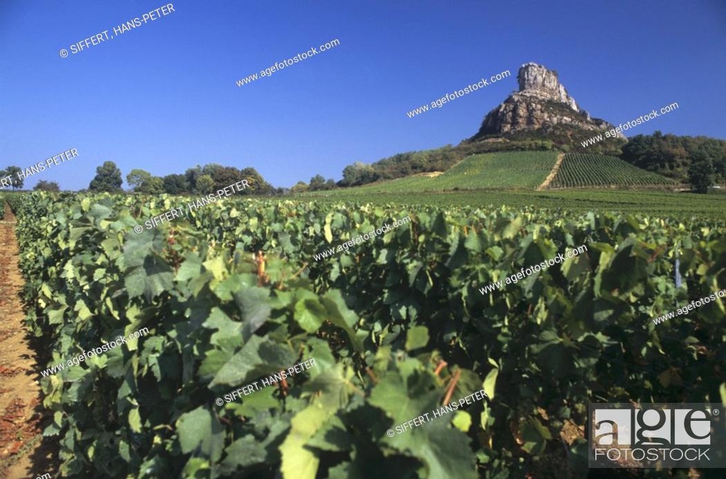 Stock Photo: The Rock of Solutre, Pouilly-Fuisse in Maconnais, Burgundy.