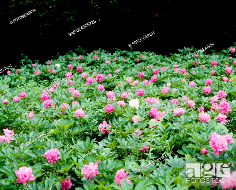 Stock Photo: field, nature, flowers, flower, scene, plant, landscape.