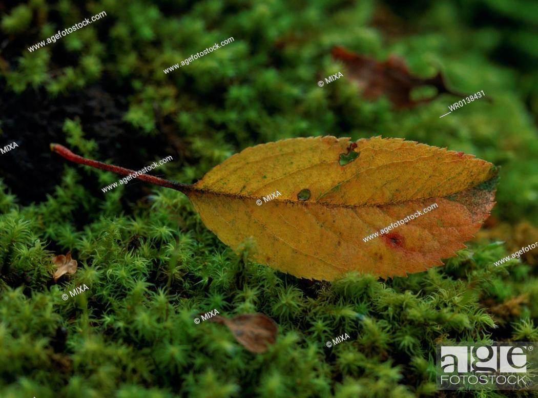 Stock Photo: Close-up of yellow leaf.