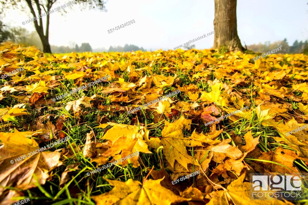 Imagen: autumnal painted leaves in warm, sunny color on a meadow.