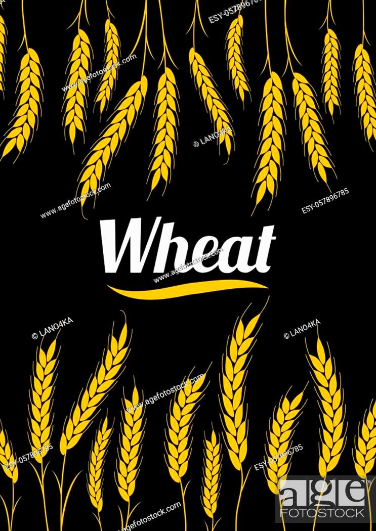 Stock Vector: Design cover Gold Wheat Ears on black background. For Natural Product Company. Organic wheat, bread agriculture.