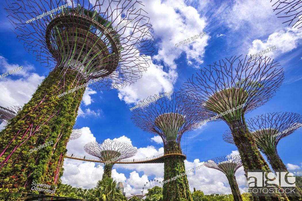 Imagen: The Supertree Grove at Gardens by the Bay, Singapore, Republic of Singapore.