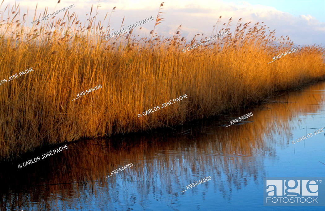 Stock Photo: Parque Natural de S'Albufera de Mallorca.