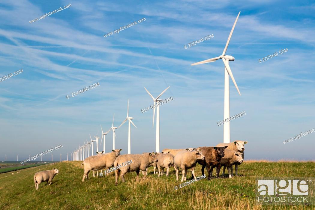 Photo de stock: Long row Dutch wind turbines with herd of sheep in front of it.