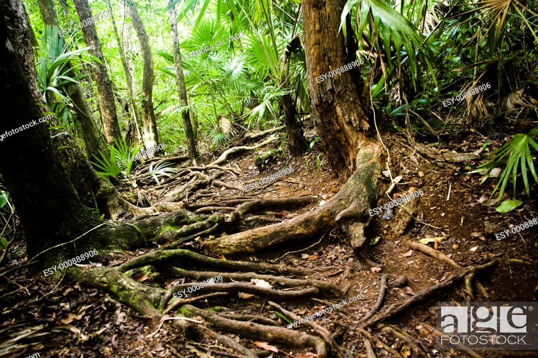 Stock Photo: Sian Ka'an Biosphere Reserve  Quintana Roo, Mexico.