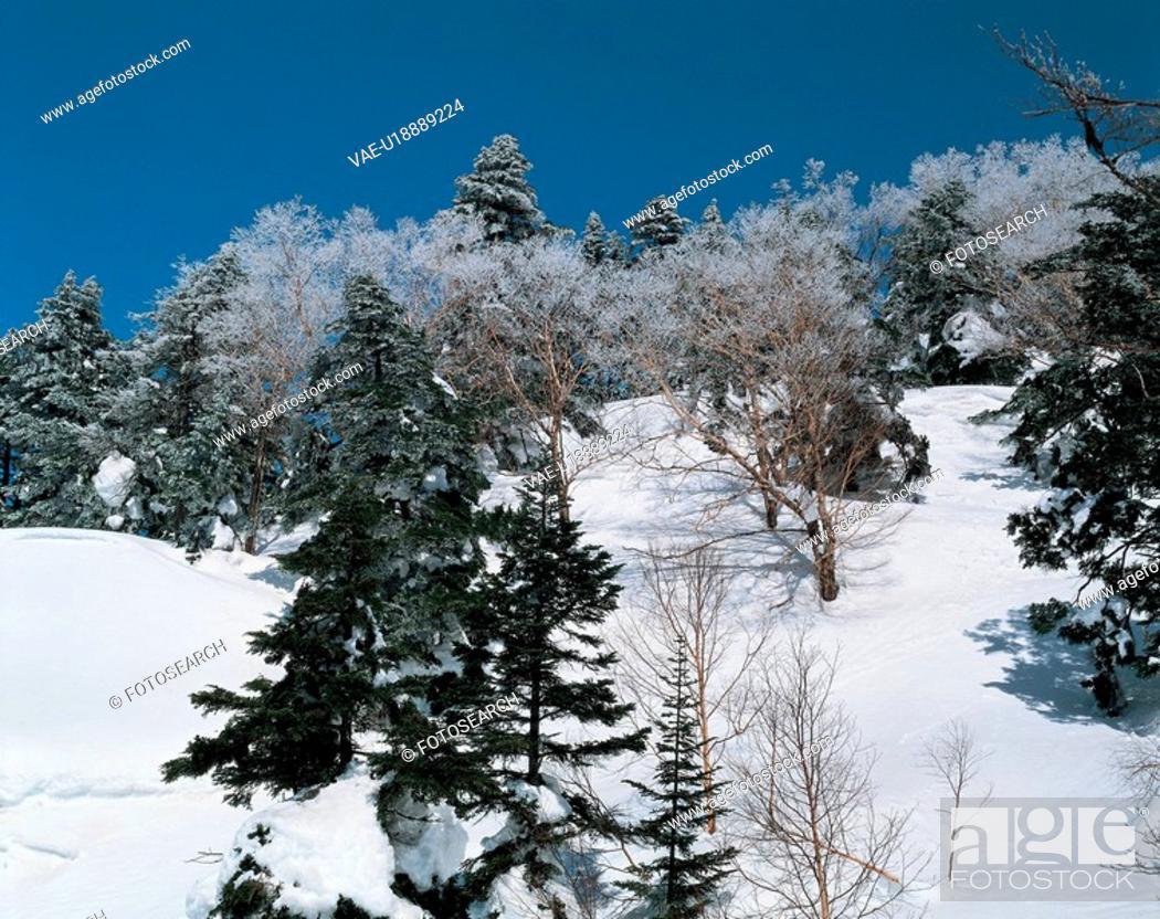 Stock Photo: winter, landscape, snow, forest, mountain, snowscape, nature.