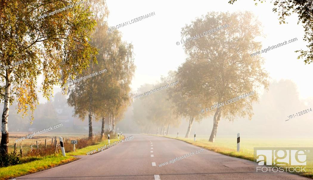 Stock Photo: A rural road with morning mist, birch trees on the side. Shot in autumn, southern germany, Bavaria.