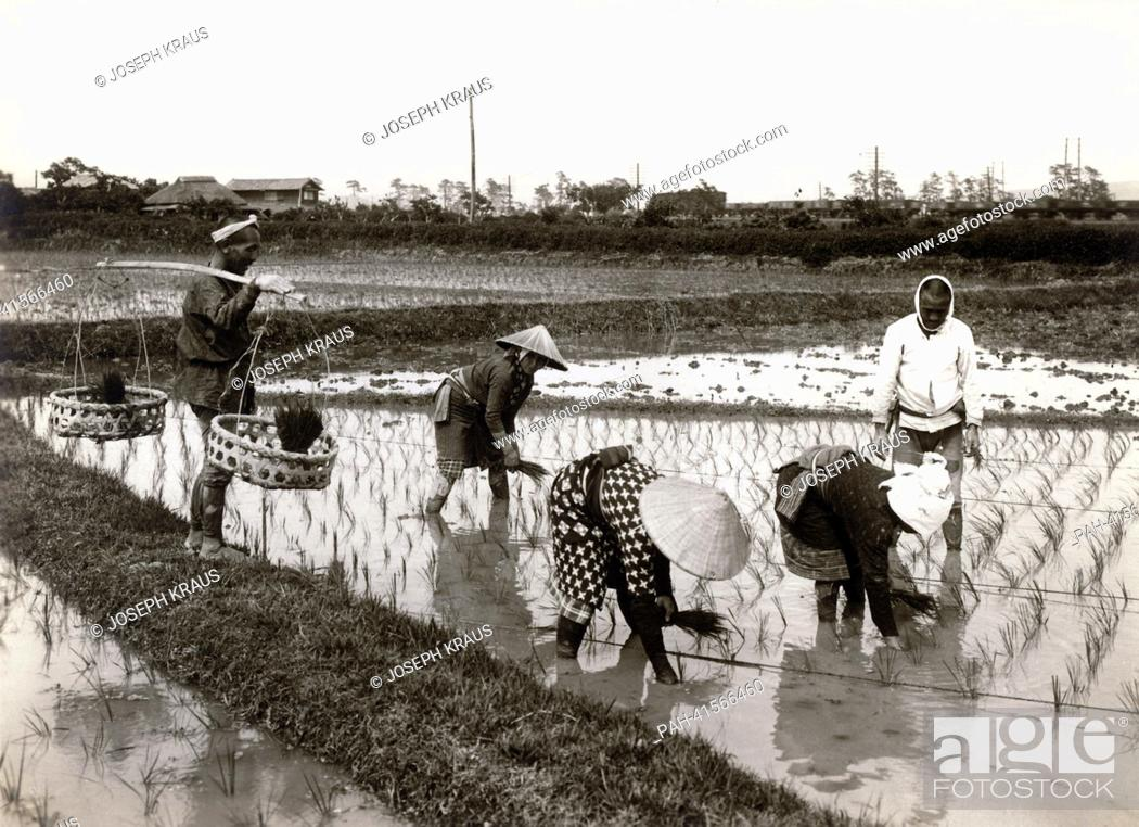 Stock Photo: Planting rice. Pictured in the early 1920th. - /Japan.