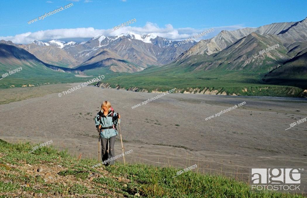 Photo de stock: Hiking through Denali National Park, Alaska Range in background, Alaska, USA.