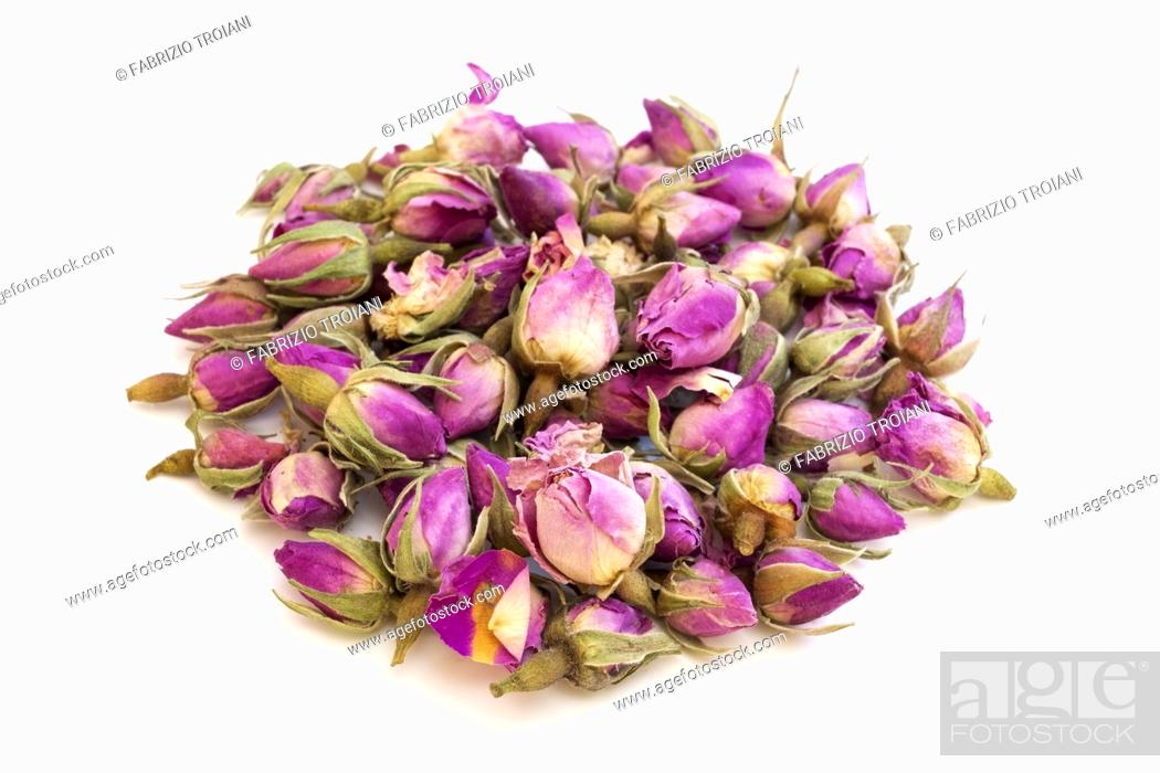 Imagen: Pink dried rosebuds on a white background.
