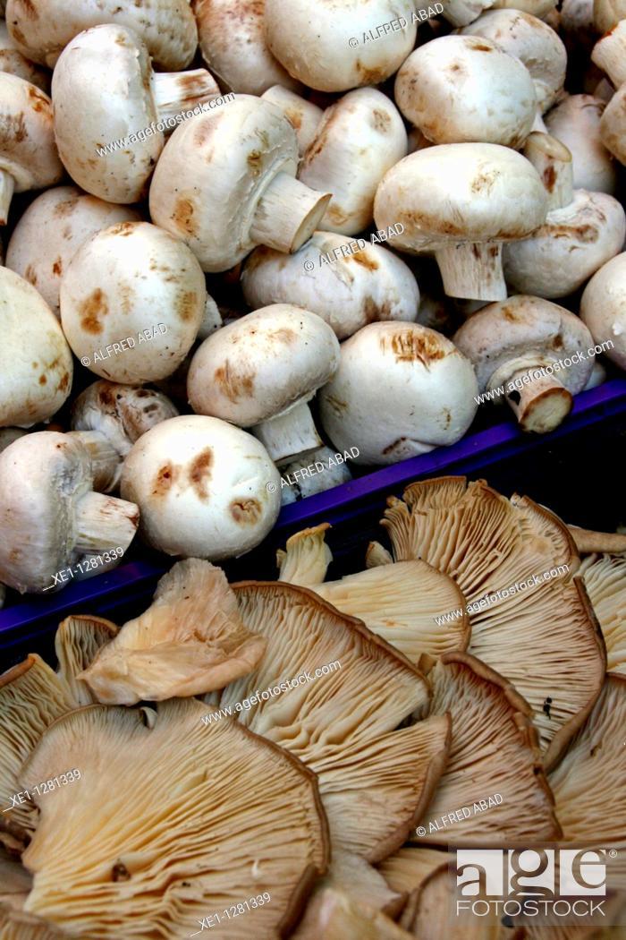 Stock Photo: campiñones and rovellones, mushrooms.