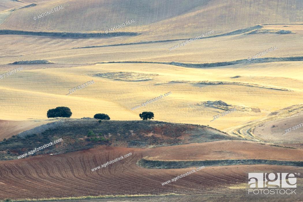 Stock Photo: Cereal fields. La Hinojosa. La Mancha. Cuenca.