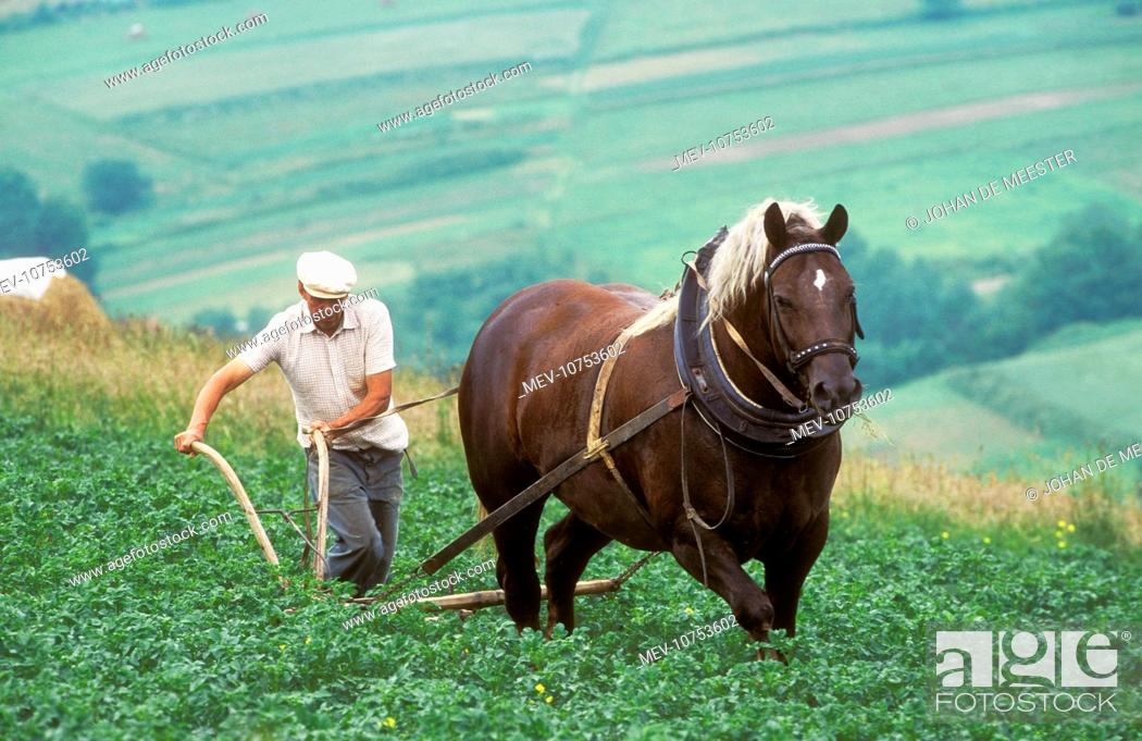 Poland - Farmer working on land with horse, Stock Photo