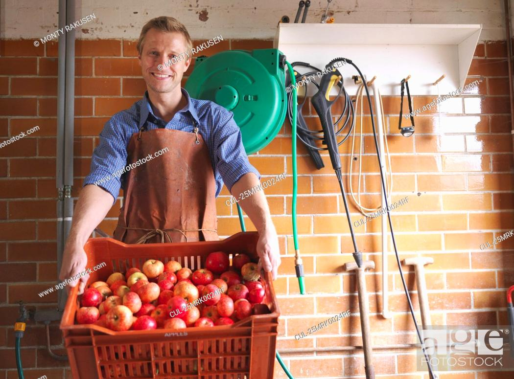 Stock Photo: Man holds crate of apples in cider house.