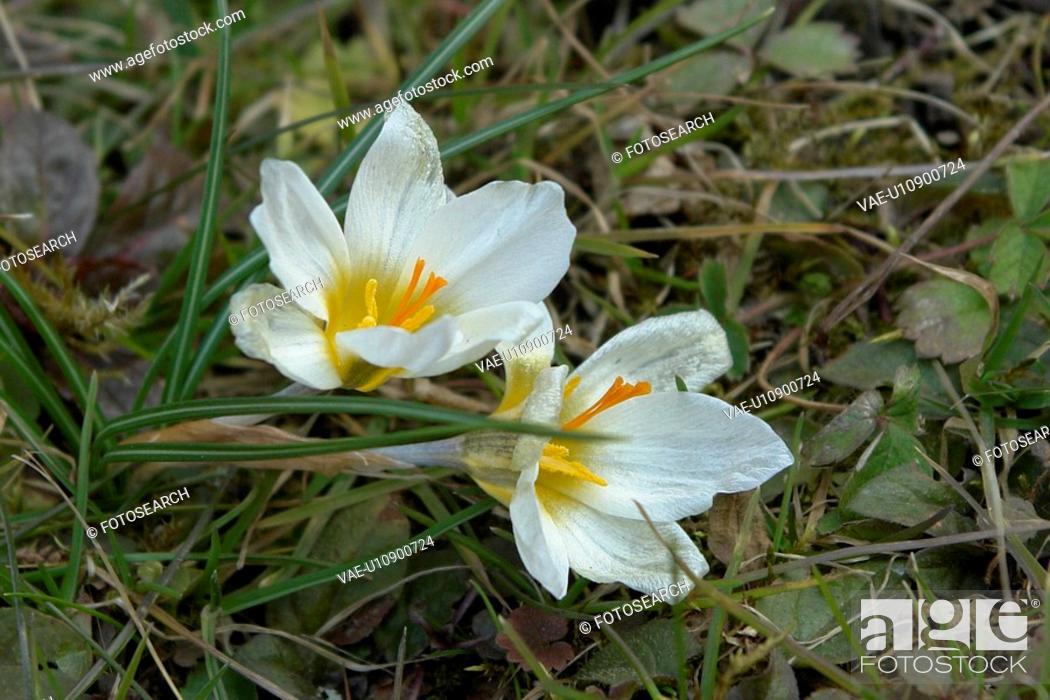 Stock Photo: wiesen, felder, berne, blooms, blumenrfarben, botany, colored.