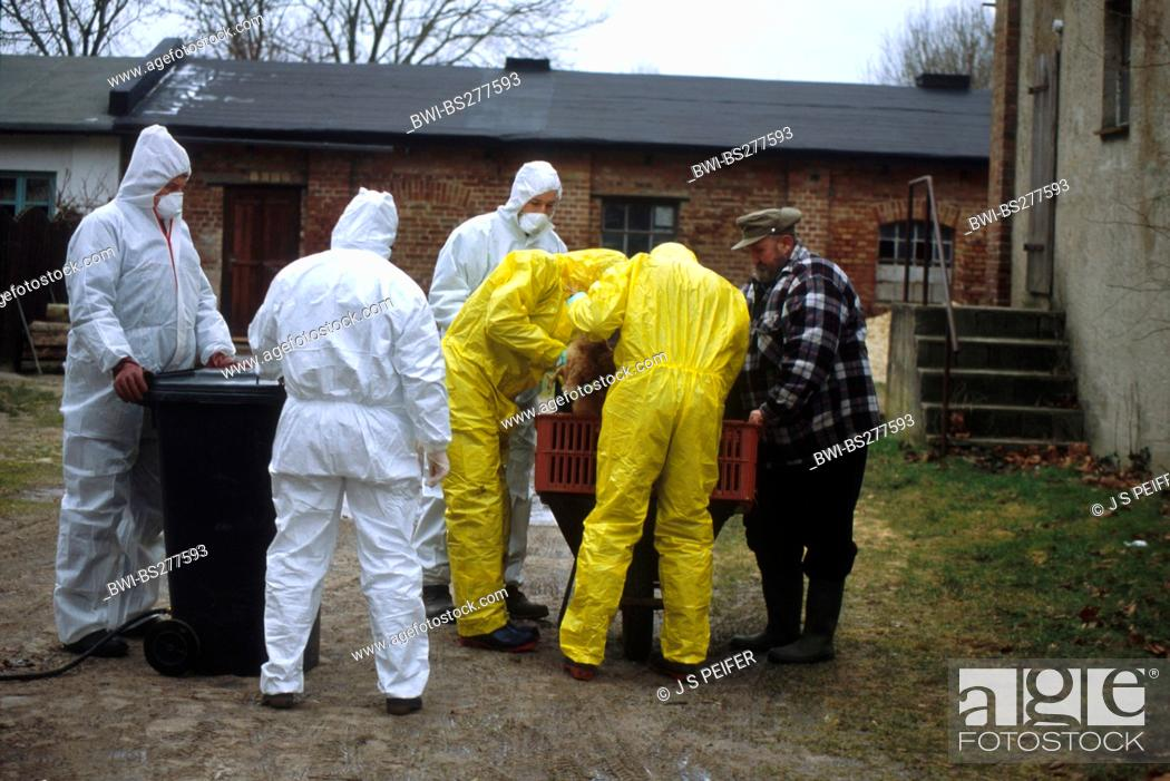 epidemiologists in protective suits together with the poultry farmer ...