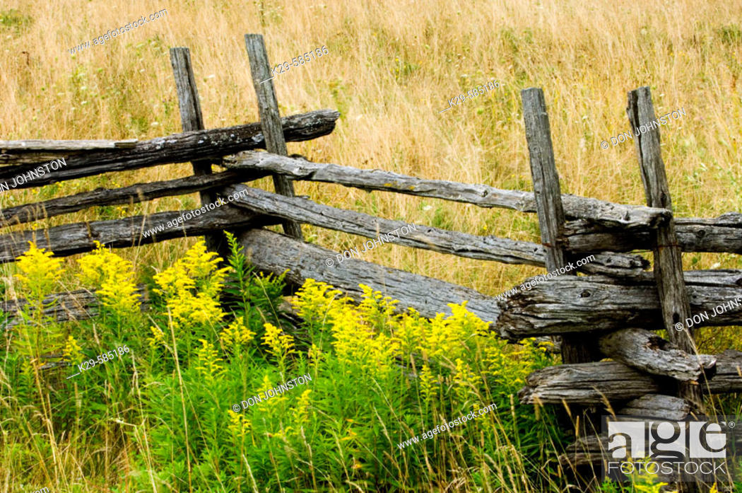 Stock Photo: Cedar split rail fence and goldenrods in late summer. Manitoulin Island. Ontario.