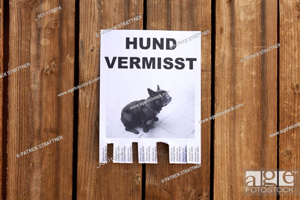 Stock Photo: A lost dog in flyer in German posted on a wooden fence.