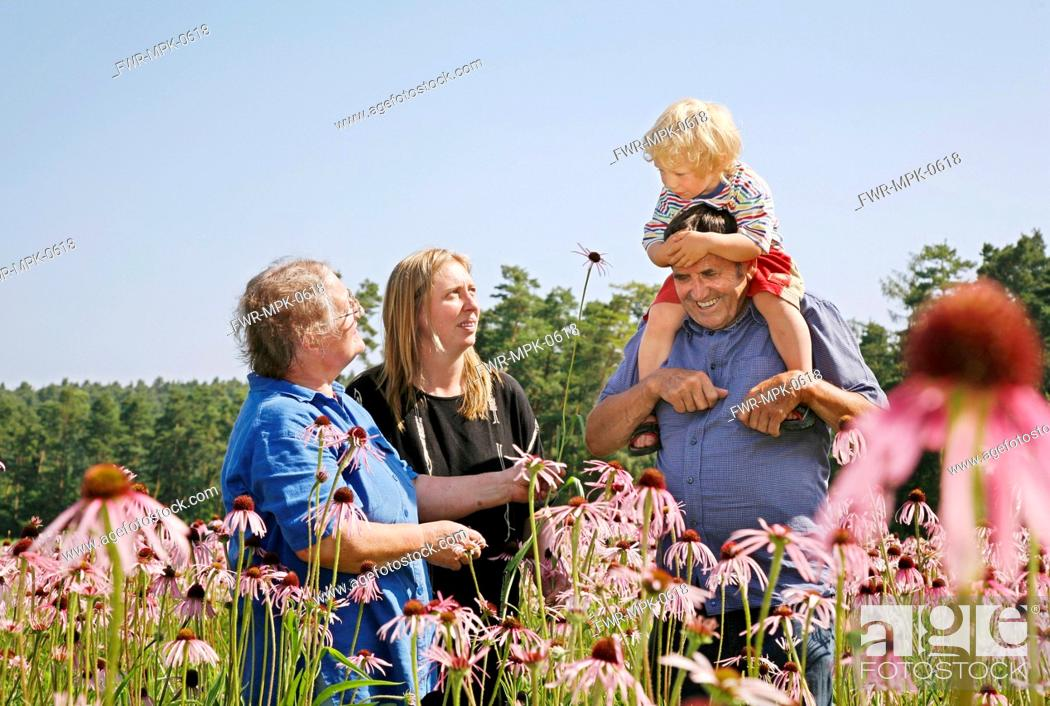 Stock Photo: Echinacea pallida, Echinacea, Purple coneflower.