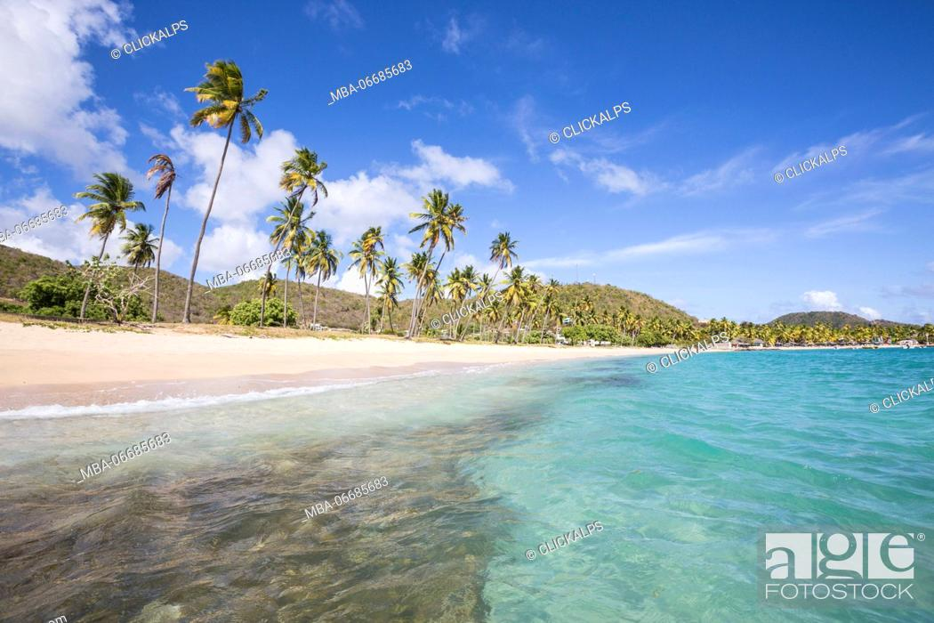 Imagen: The long beach surrounded by palm trees and the Caribbean Sea Carlisle Morris Bay Antigua and Barbuda Leeward Island West Indies.