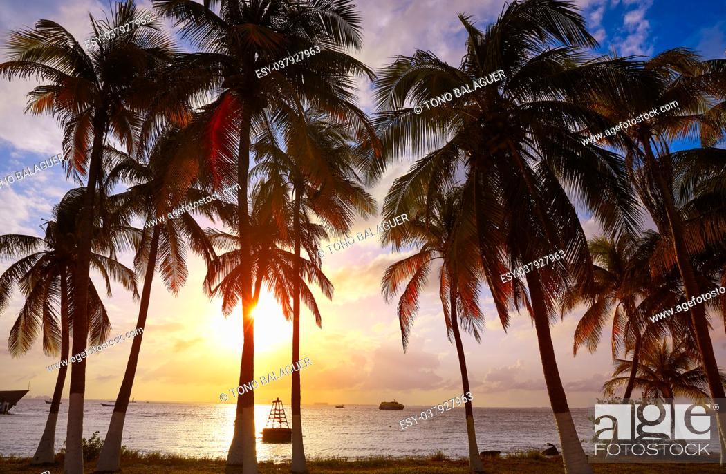 Photo de stock: Isla Mujeres island Caribbean beach sunset palm trees Riviera Maya in Mexico.