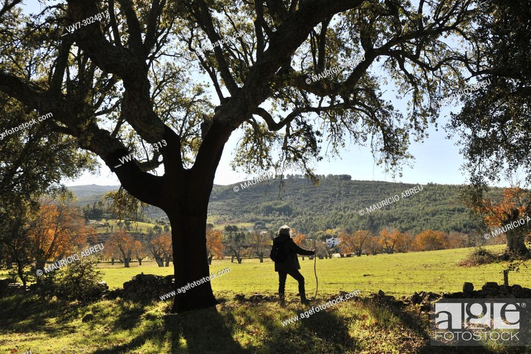 Imagen: Cork tree in Autumn. Sao Mamede Natural Park, Portugal.