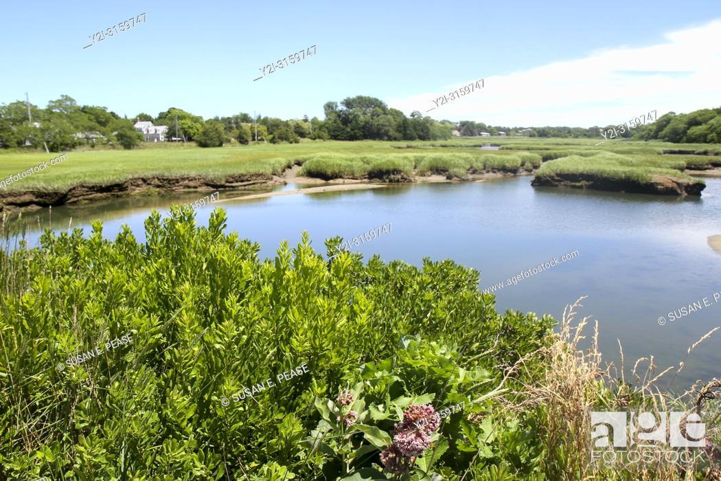 Stock Photo: Wetlands, Barnstable, Cape Cod, Massachusetts, United States.