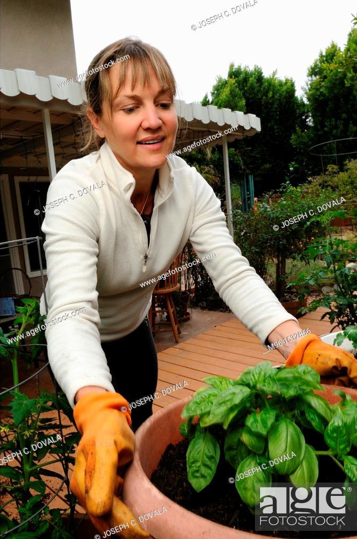 Stock Photo: Woman tending home garden, Thousand Oaks, California, USA.