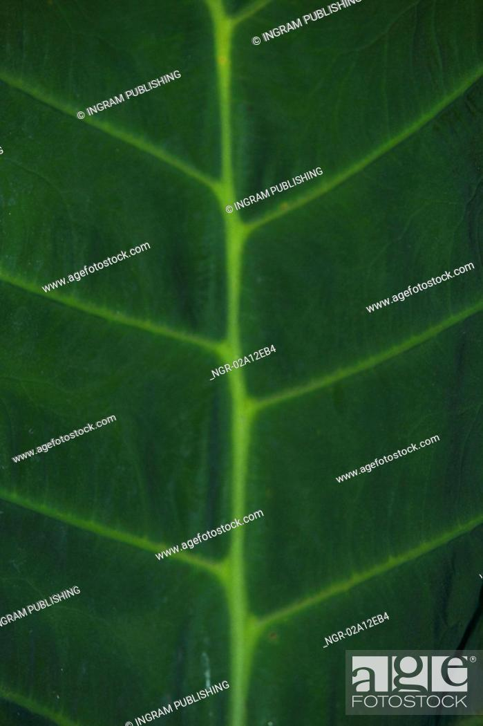 Stock Photo: Close-up of a leaf.